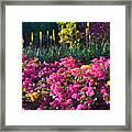 Caribbean Garden Framed Print