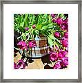 Cascading Purple Tulips  Framed Print