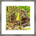 Cat In Field Framed Print