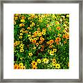 Celebration Of Yellows And Oranges Study 4 Framed Print