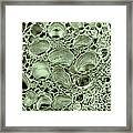 Celery Stalk, Sem Framed Print