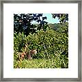 Cheetah Zoo Landscape Framed Print