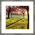 Cherry Blossom In A Park At Dawn Framed Print