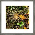 Chilean Tarantula Framed Print