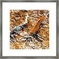 Chinook In Cottage Lake Creek Framed Print