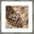 Christmas Pinecone On Barn Floor Framed Print