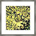 Chrysanthemum Pop Framed Print