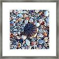Circluar Shell In Watercolor Framed Print