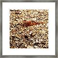Cleaner Shrimp On Shell Covered Bottom Framed Print
