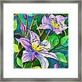 Clematis For Elsie Framed Print