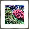 Close Quarters Framed Print by Wendy J St Christopher