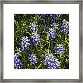 Close-up From Above Framed Print
