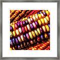 Close Up Indian Corn Framed Print