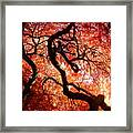 Closeness Framed Print