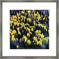 Colorado Autumn #5 Framed Print