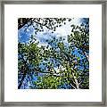 Colorado Skies Framed Print
