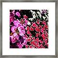 Colorful Flowers. Framed Print