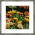 Colorful In The Garden  Framed Print