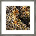 Colorful Lichens Framed Print