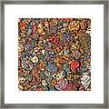 Colorful Rocks In Stream Bed Montana Framed Print