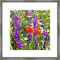 Colorful Spring Wild Flowers Framed Print
