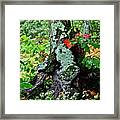 Colorful Stump Framed Print