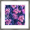 Colorful Succulent Plants Framed Print