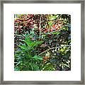 Colorful Tropical Plants Framed Print