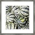 Colorful Winter Acorn Squash On Display Framed Print