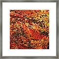 Colors Blowing In The Wind Framed Print by Lori Frisch