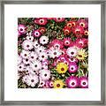 Colors Of Spring Framed Print