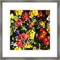 Colourful Spring Flowers Framed Print