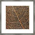 Copper Leaf Framed Print