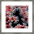 Coral Closeup Framed Print