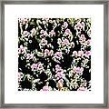 Coral Spawning  Framed Print