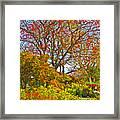 Flame Tree Framed Print