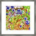 Cornfield With Cornflowers Framed Print