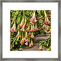 Costa Rica Wedding Bells Framed Print