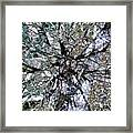 Cottonwood Montage Framed Print