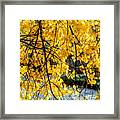 Cottonwood Tree Along The River Framed Print