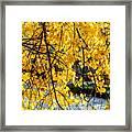 Cottonwood Tree Along The River Framed Print
