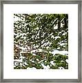 Country Winter 8 Framed Print