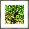 Courtship Of The Butterflies Framed Print