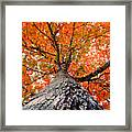 Covered In Fall Framed Print