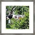 Cow Statue Framed Print