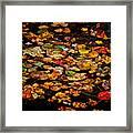 Creek Leaves Framed Print