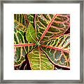 Croton - A Center View Framed Print