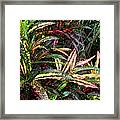 Croton 1 Framed Print by Eikoni Images
