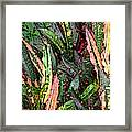 Croton 3 Framed Print by Eikoni Images