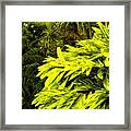 Croton Cascading Down The Hillside Framed Print